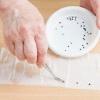 2 Способу як посадити перці на розсаду на туалетний папір: опис методу, його плюси і мінуси