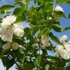 Що за рослина рододендрон? Небезпечно воно?