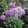 Як доглядати за рослиною спатифиллум? Я поливаю, але все-одно квіти в`януть