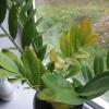 Які рослини можна посадити, якщо в кімнаті сухий, теплий мікроклімат, крім