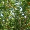 Абрикоси примор`я і південній сибіру,   досвід по їх вирощуванню біолога юрия бродського