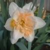 Чому не цвіте юка, їй 2 роки, на сонце