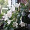Хто небудь знає, як називається ця рослина?