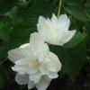 Алоказия - красиве, але отруйна рослина. Ви тримаєте вдома отруйні рослини?