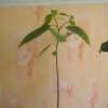 Подскажите название рослини (2)?