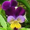Грунт для квітів: способи поліпшення.