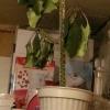 Привіт) не підкажете як називається ось ця рослина
