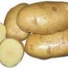 Білоруська красуня - опис смачного і врожайного сорту картоплі «янка»