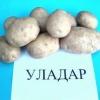 Білоруський картопля сорту уладар - відмінний смак і простота вирощування