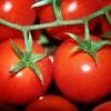 Хвороби помідорів: як з ними боротися