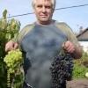 Сади і садівництво росії і сибіру