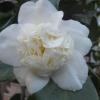 Читала, що алое не цвіте в домашніх условіях.а у кого ні будь воно цвіло будинку?