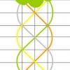Як з насіння виростити годецию, шеффлеру, і цикламен?