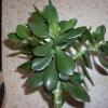 Що це за рослина?