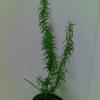 Як називаеться ці рослини?