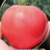 «Чудо ринку» - невибагливий і смачний томат на вашій ділянці, його характеристики і опис сорту
