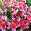 Квітки сенполії побіліли!