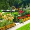 Квіткові добрива: типи, види, особливості застосування