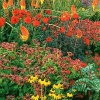 Квіти - прикраса саду, і. Ісаєва