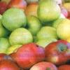 Дієтичні і лікувальні властивості яблук, застосування їх в народній медицині