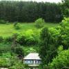 Дикі дерева і чагарники на садовій ділянці, умови зростання