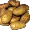 Для любителів ранніх врожаїв - картопля «брянський делікатес»: опис сорту і характеристика