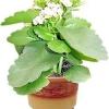 Любі друзі! Яке рослина зображена на фотографії?