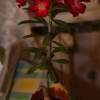Подарували хризантеми і трояндочки. Вони вже відцвітають. Що робити далі? Хочеться зберегти
