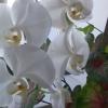 Де ростуть гербери? Яких квітів вони бувають? Картинки вітаються! Заздалегідь дякую !