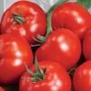 Відмінний урожайний сорт томатів для початківців городників - це «медова цукерочка»