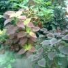 Кливия що це за рослина, як виглядає, як доглядати, примхливо чи? Дякуємо