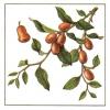Сидр, ююба, туба, лотос, зизифус, унаби, китайський фінік.что ви знаєте про ці рослини?