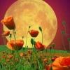 Де знайти календар рослин на 2017 рік?