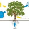 Генератор со2 для теплиць і інші способи організації фотосинтезу ваших рослин