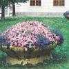 Грамотне оформлення клумб на садовій ділянці