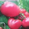 Справжні гурмани оцінять помідори «рожевий скарб f1»: опис та характеристика сорту