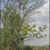 Підсумки зими, весна 2014 року в уральському саду віталій миколайович шаламова