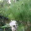 Вріезія примхлива рослина? У кого є особистий досвід змісту