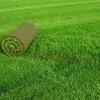 Як часто вносити добрива для газонної трави