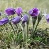 Як робити добрива з рослин: кропива, живокіст і різні суміші