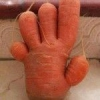 Як позбутися від морквяної мухи