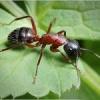 Як позбутися від мурашок