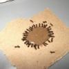 Як позбутися від докучливих комах? Боротьба з мурахами в квартирі народними засобами