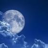 Як місячний місяць впливає на рослини, посадка на місяць.