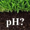 Як визначити кислотність ґрунту на своїй ділянці