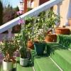 Як полити квіти на дачі і будинки під час відсутності господарів