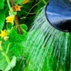 Як поливати огірки в теплиці: крапельним поливом або по-старому?