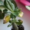 Як підвищити вологість повітря в квартирі? Сохнут рослини.