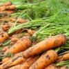 Як правильно зберігати моркву: кращі способи