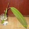 Підкажіть вік рослин (мирт.)